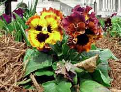 <!--:es-->Plantas contra mosquitos! . . . Flores repelentes para ganar<!--:-->