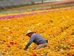 <!--:es-->Sindicato busca trabajadores temporales! …Redadas agravaron escasez de campesinos<!--:-->