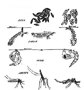 <!--:es-->Mosquitos: Evita que te ataquen! …¿Eres manjar para los insectos?<!--:-->