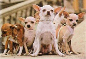 <!--:es-->Mujer recibe cinco perros clonados en Sudcorea<!--:-->