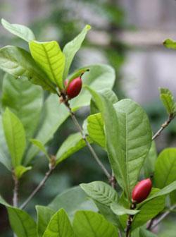 <!--:es-->Ponle Color a tu Verano! …Un jardín Bello y Saludable en 10 pasos!<!--:-->