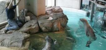 <!--:es-->Visita los increíbles acuarios en Estados Unidos<!--:-->