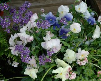 <!--:es-->LATE SEASON CARE FOR YOUR GARDEN …Six Things To Do Now for a Better Garden Next Year<!--:-->