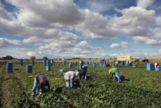 <!--:es-->Ley en Alabama hace recordar batalla por derechos de los negros en Estados Unidos …Agricultores reiteran la grave falta de trabajadores levantar las cosechas<!--:-->