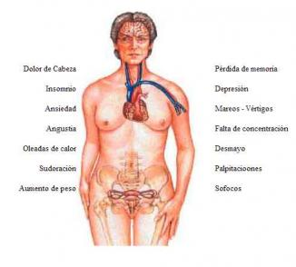 <!--:es-->Identifican cuando comienza el proceso de la menopausia  …Los investigadores se enfocan en trece nuevas pistas genéticas<!--:-->