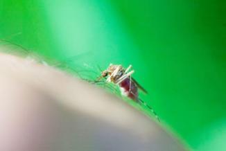 <!--:es-->Protégete del Virus del Nilo Occidental<!--:-->
