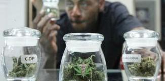 <!--:es-->Legal battle looms over marijuana initiatives<!--:-->