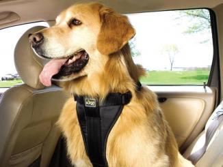 <!--:es-->5 riesgos de manejar con una mascota abordo  …Te decimos las más comunes.<!--:-->