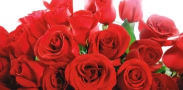 ..Si de una fea rama nace una linda flor, por que no de una bonita amistad un bello amor.