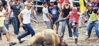 <!--:es-->El brutal linchamiento de un toro genera repudio e indignación en Colombia<!--:-->