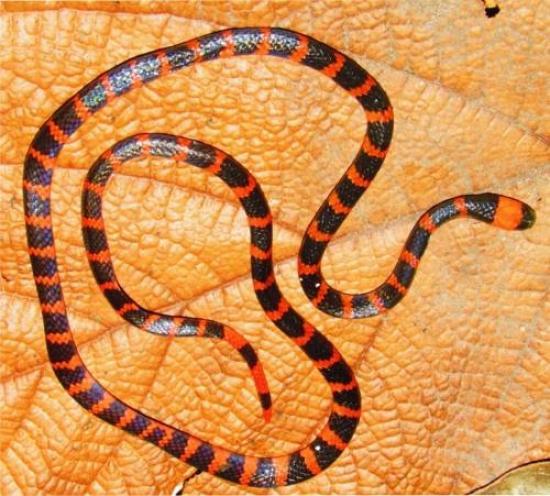 <!--:es-->Revelado el secreto del veneno de una de las serpientes más venenosas<!--:-->