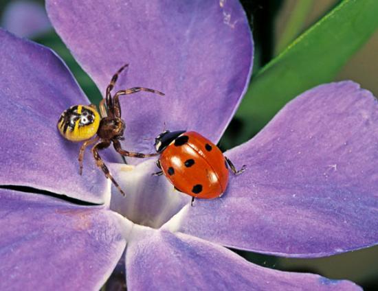 <!--:es-->Veneno de araña para combatir el dolor<!--:-->