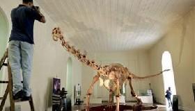 <!--:es-->Fossils of new dinosaur species found in Brazil<!--:-->