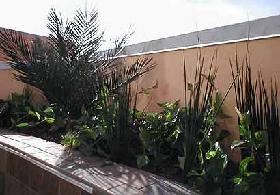 <!--:es-->Las Plantas Favoritas de Estación<!--:-->