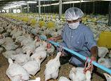 <!--:es-->Bird flu vaccine may be too late for pandemic: expert<!--:-->
