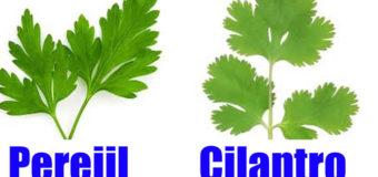 El Cilantro y el Perejil son la salvación para  la diabetes, hígado,  riñones, páncreas, vista y colesterol malo
