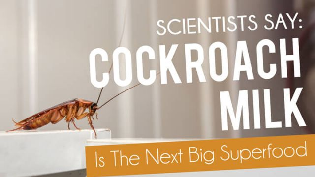 Cockroach milk anyone? It may be the next big superfood
