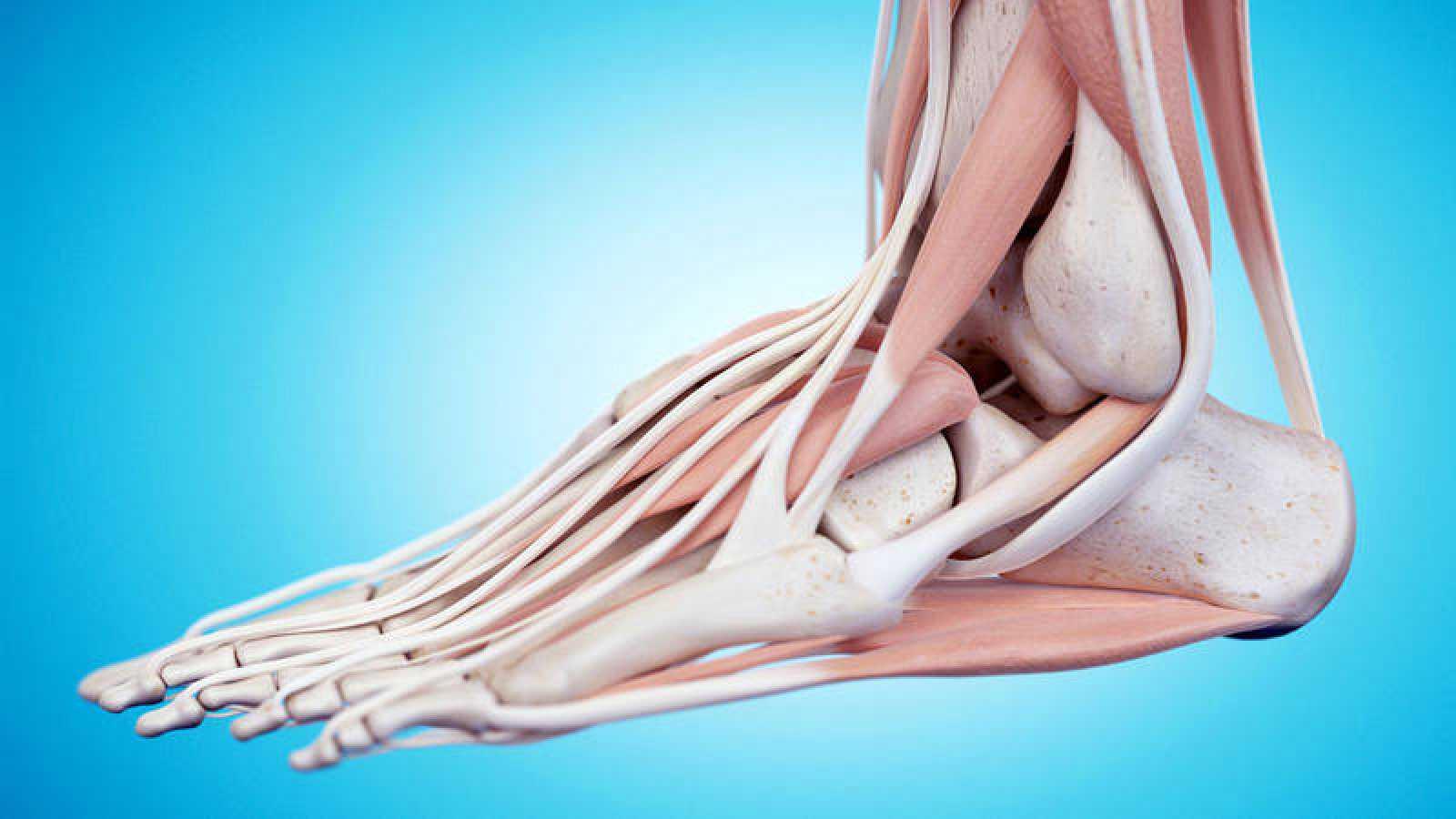 Descubren un ligamento en el tobillo que no está en los manuales de anatomía