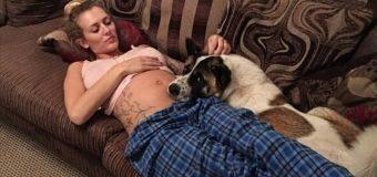 Perro Salva la Vida a su Dueña Embarazada