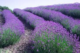 El maravilloso poder curativo de las plantas  y hierbas medicinales más conocidas