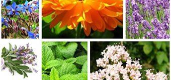 Guía de remedios naturales para 30 problemas de salud cotidianos